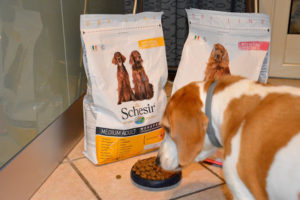 Schesir Dry Line, la ricetta ideale per il mio cucciolo